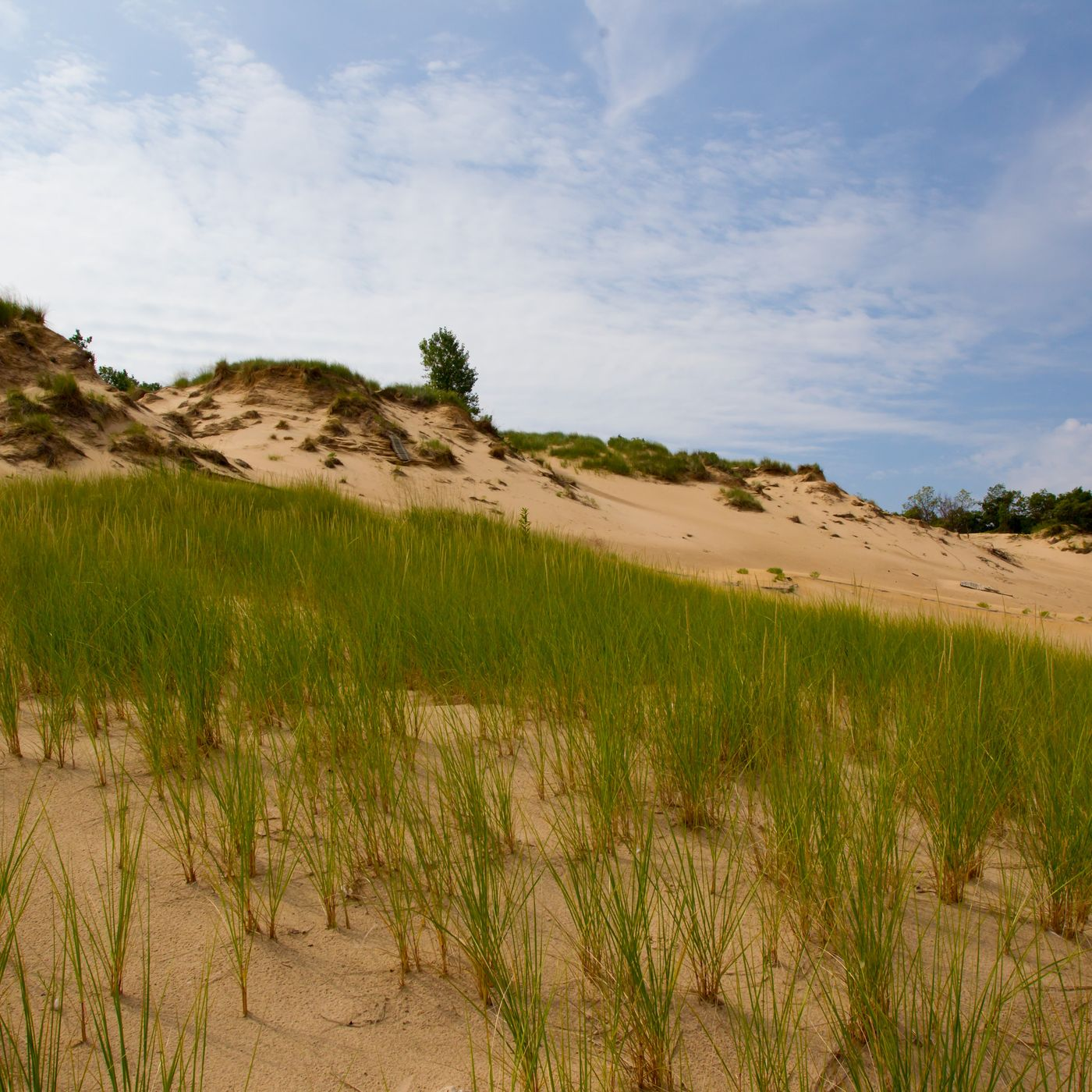 Indiana Dunes Condition Park