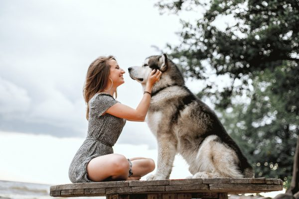 Pet Dog Satisfied