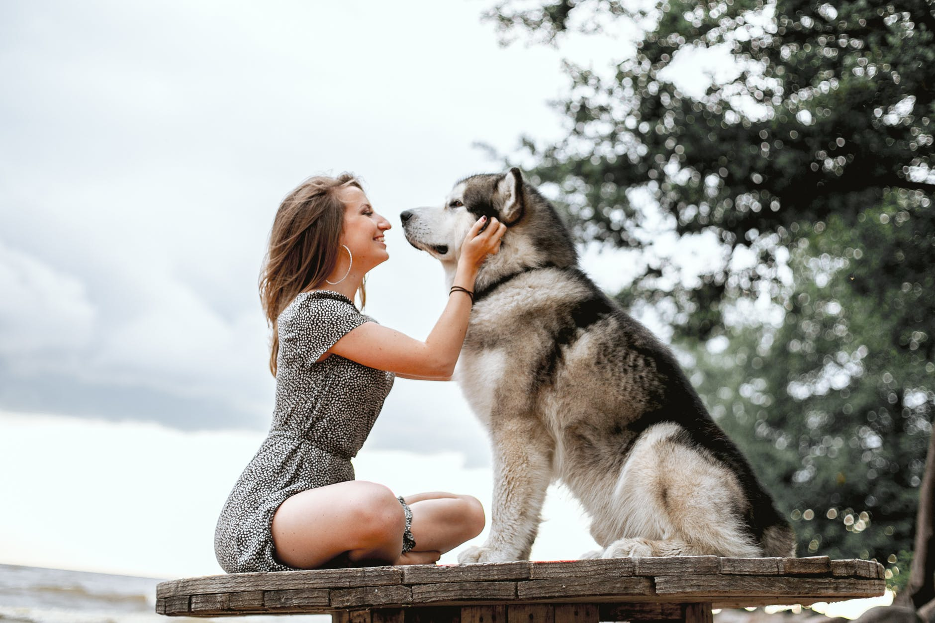 Tips to Keep your Pet Dog Satisfied