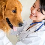 Dogs Need Vet Physicians