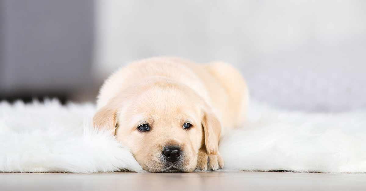 behavior of puppies