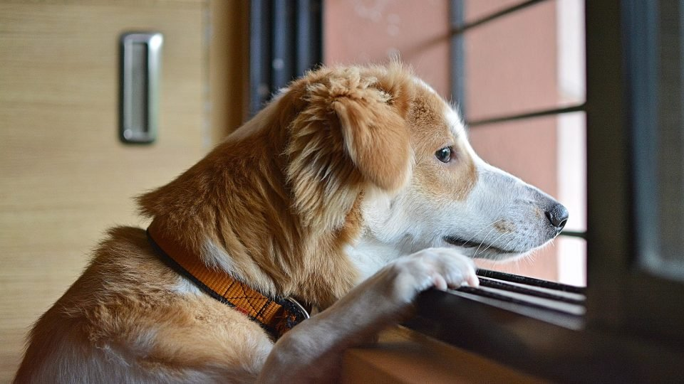 Benefits of Leaving Your Dog in The Dog Care Centers